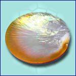 Philippine Exporter Raw of Pearls code JPROP002